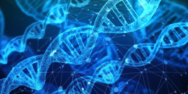 גנטיקה - תמונת אילוסטרצייה